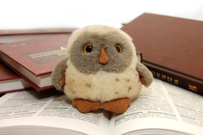 Owl a symbol of wisdom and knowledge royalty free stock photography