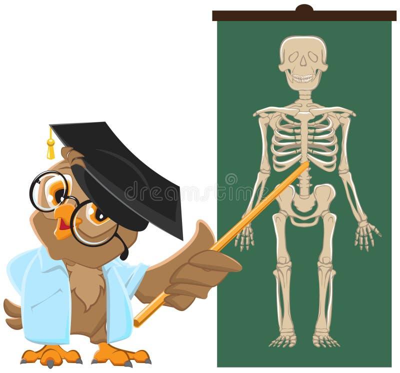 Owl Teacher Leçon d'anatomie, l'étude du squelette humain illustration libre de droits