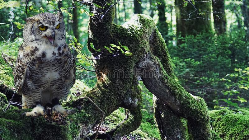 Owl, Tree, Fauna, Bird stock photos