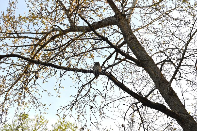 Download Owl in a tree stock image. Image of leaves, park, branch - 100820803