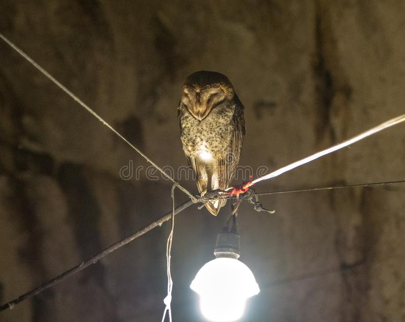 Owl in Volcanic Cave royalty free stock photography