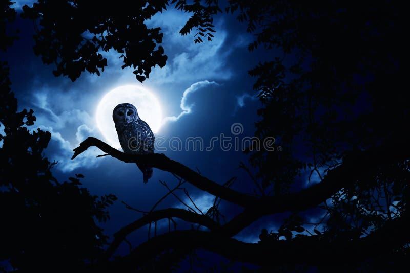 Owl Watches Intently Illuminated By fullmåne på allhelgonaaftonnatt royaltyfri fotografi