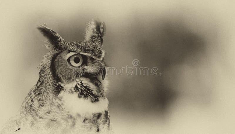 Owl Watching lizenzfreie stockfotografie