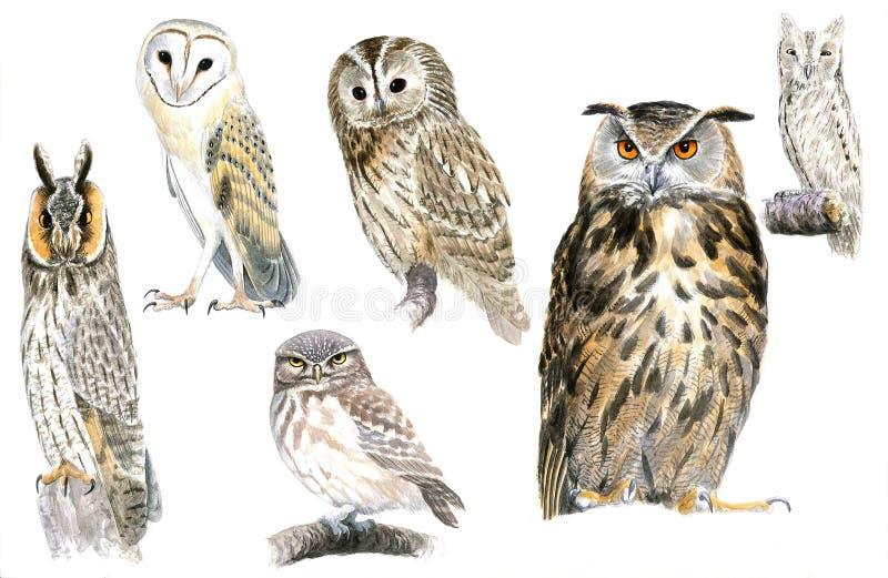 Owls royalty free illustration