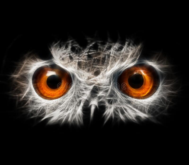 Owls Portrait. owl eyes - abstract painting, fractal.  stock photography