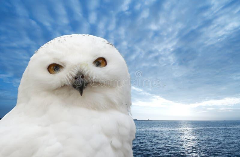 owlsnow arkivbilder