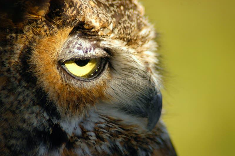 Download Owlstående fotografering för bildbyråer. Bild av owls, horned - 33173