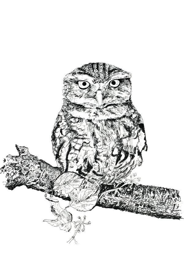 Download Owltawny stock illustrationer. Illustration av penna, teckning - 507531