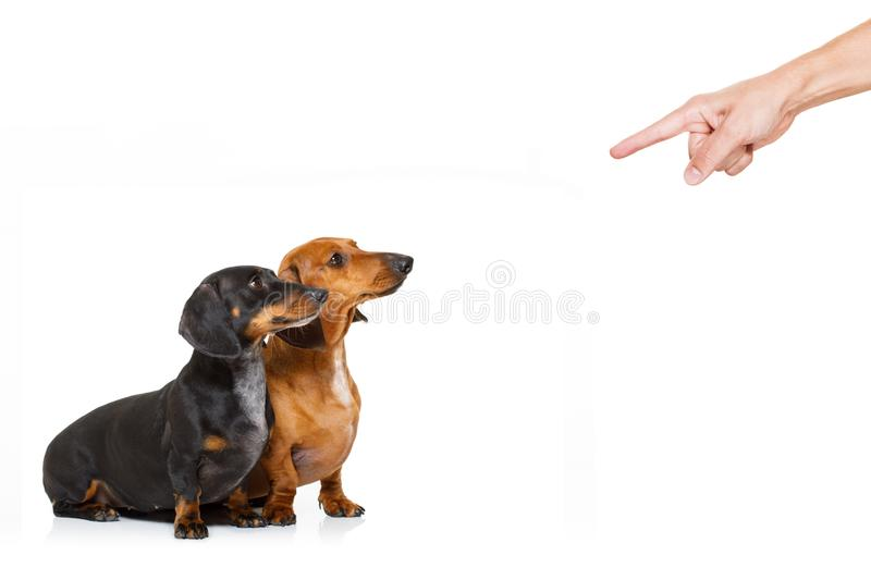 Owner punishing his dogs royalty free stock images
