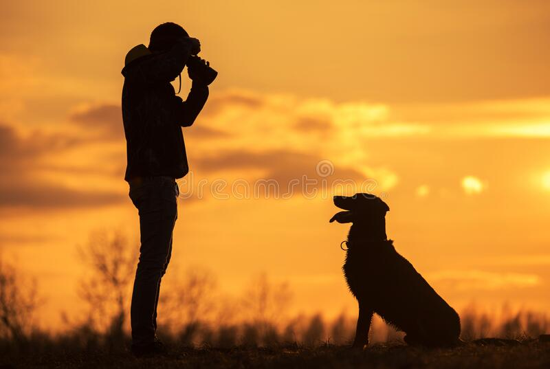 Owner take a photo from his dog in the nature. At sunset royalty free stock photography