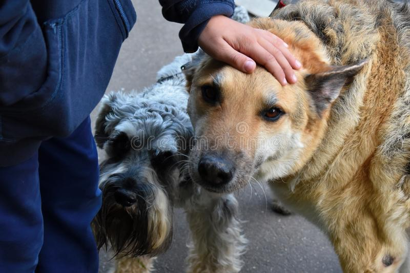 The boy strokes a homeless unfortunate dog. The problem of street city stray dogs stock image