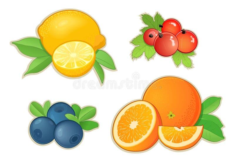 owoc ilustracja wektor