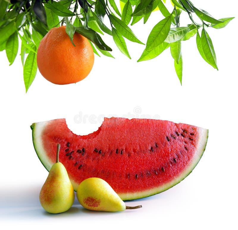 owoc biały obraz stock
