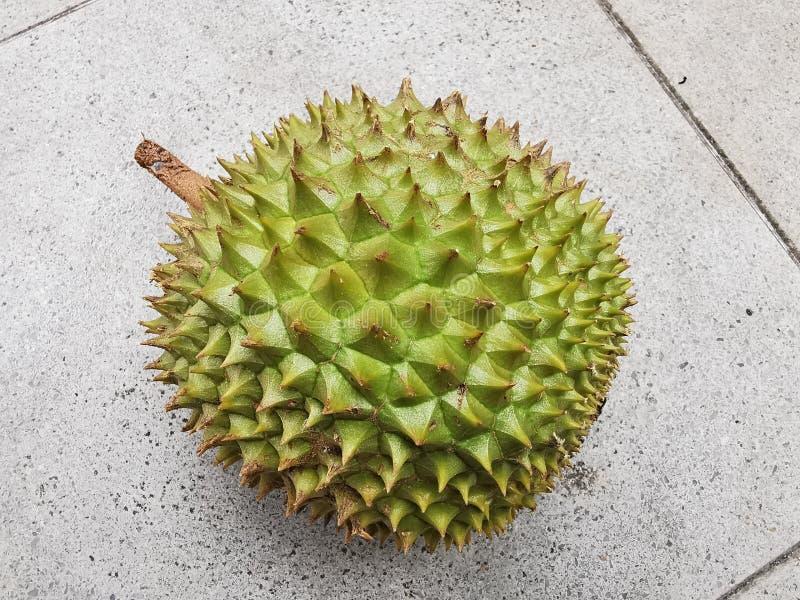 Owoc duriański, ciernisty owoc o silnym porządku fotografia royalty free