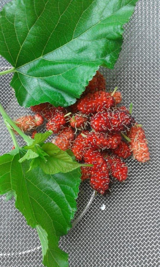Owoc greap obraz stock