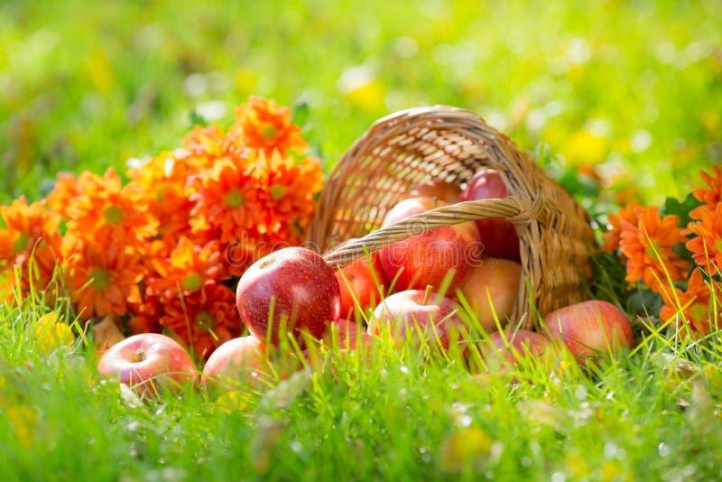 Owoc i kwiaty w jesieni zdjęcia stock