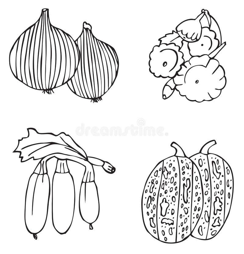 Owoc i warzywo melonowi i cebulkowi ilustracji