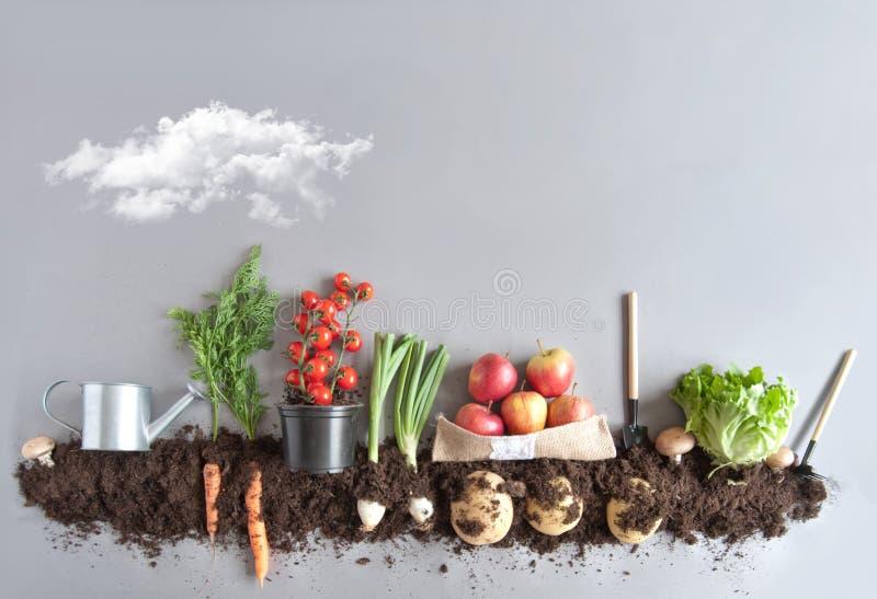 Owoc i warzywo ogród fotografia royalty free