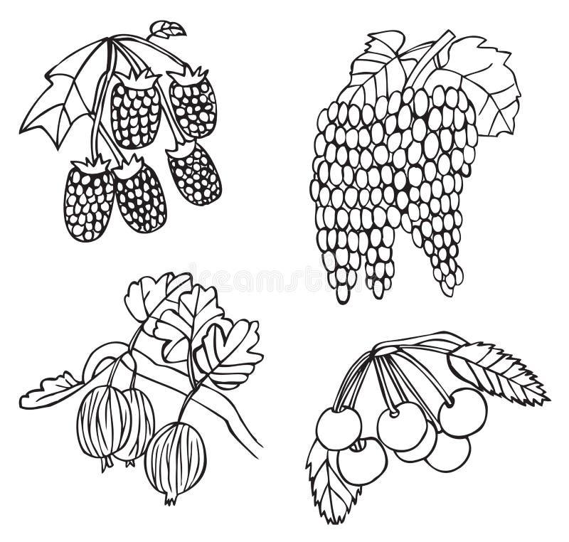 Owoc, jagoda agrest i winogrona i ilustracja wektor