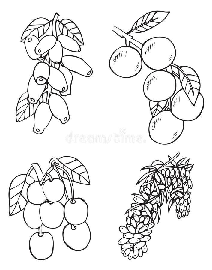 Owoc, jagody i ilustracji