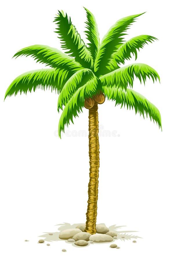 owoc kokosowy drzewko palmowe royalty ilustracja