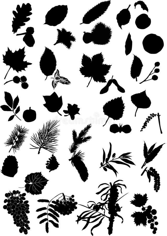 owoc liść sylwetek drzewa ilustracji