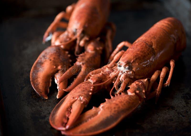 Owoc?w morza homary ?wiezi pi?kni wielcy denni homary Wyśmienicie homar na starym stole obraz stock
