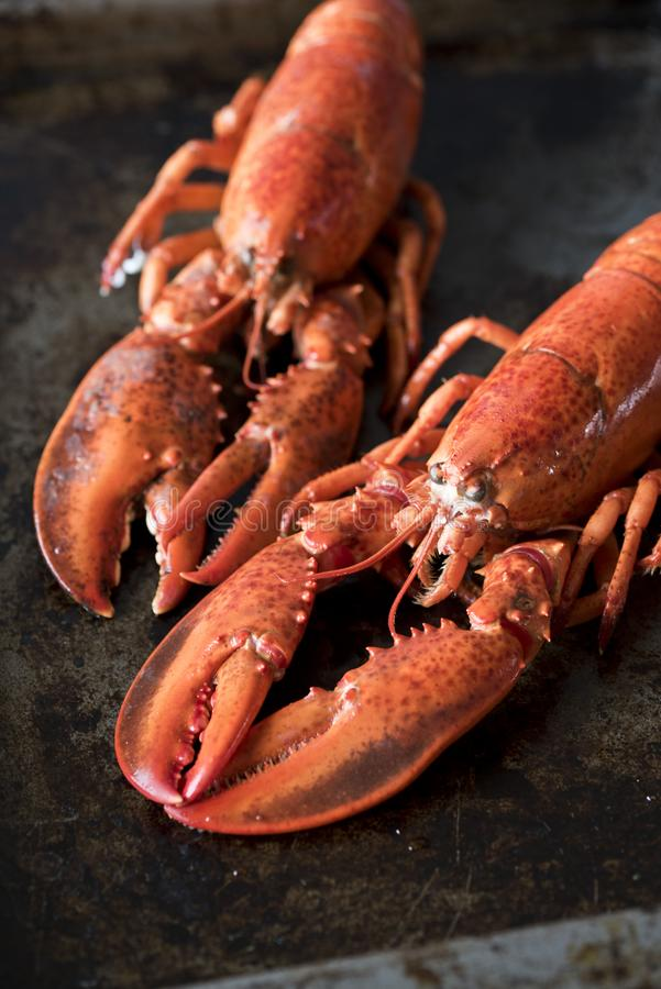 Owoc?w morza homary ?wiezi pi?kni wielcy denni homary Wyśmienicie homar na starym stole zdjęcie royalty free