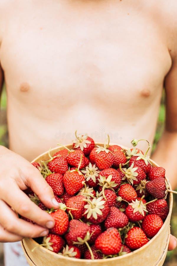 Owoc w ogr?dzie zdjęcie royalty free