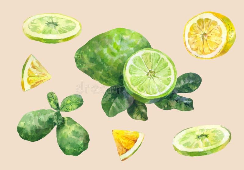 owoce cytrusowe Cytryna i wapno Pokrojony i cały ustala się akwarelę royalty ilustracja