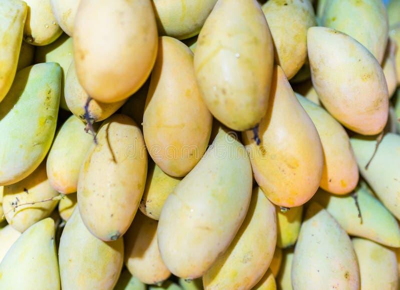 Owoce mango w świetle dziennym Mango pochodzą z Azji Południowej i są bogate w węglowodany i witaminy A,beta-karoten obrazy royalty free
