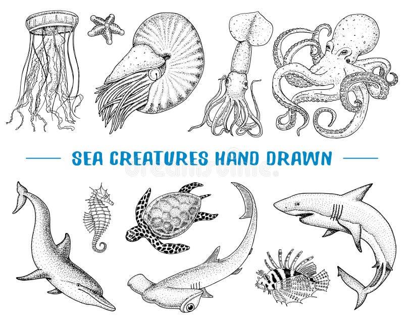 Owoce morza lub morze istoty łodzika pompilius jellyfish i rozgwiazda, ośmiornica i kałamarnica, calamari grawerująca ręka rysują ilustracja wektor