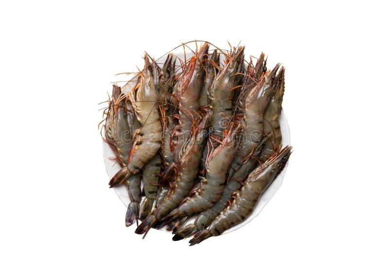 Owoce morza tło Zbliżenie surowe tygrysie garnele na talerzu odizolowywającym na białym tle Odgórny widok zdjęcie stock