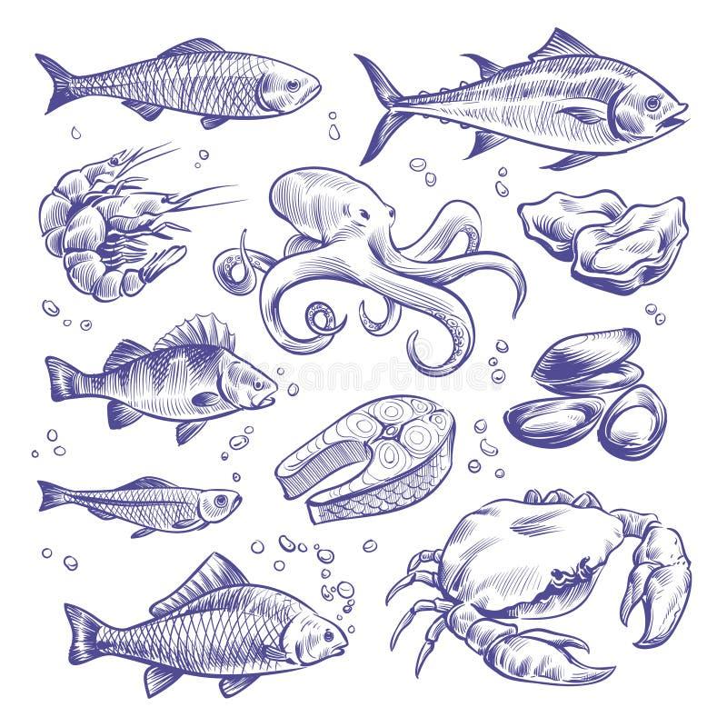 Owoce morza wręczają patroszonego Dennych ryb ostryg mussels homara kałamarnicy ośmiornicy krabów krewetek łososiowych shellfish  ilustracji