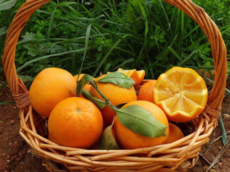 Owoce pomarańczowe, biały tło, południe obrazy royalty free