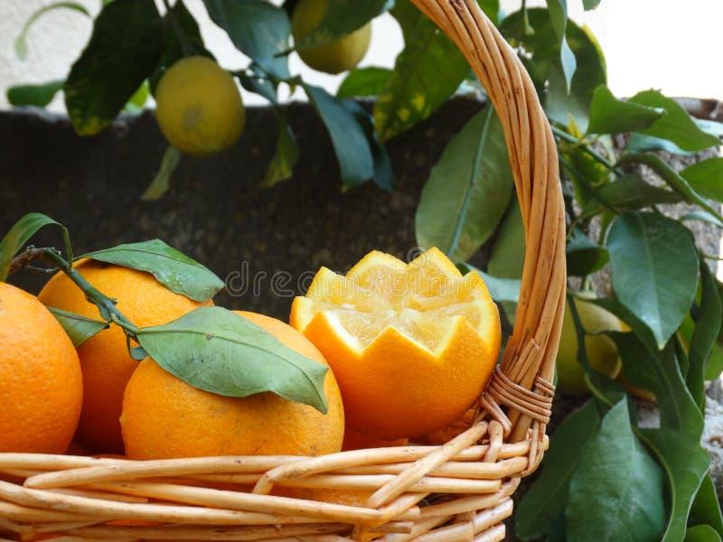 Owoce pomarańczowe, owoce zimowe, zdjęcie na farmie w południe, obraz stock
