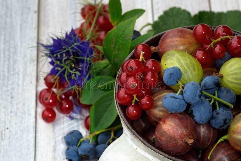 Download Owoce życia nadal zdjęcie stock. Obraz złożonej z lato - 42525810