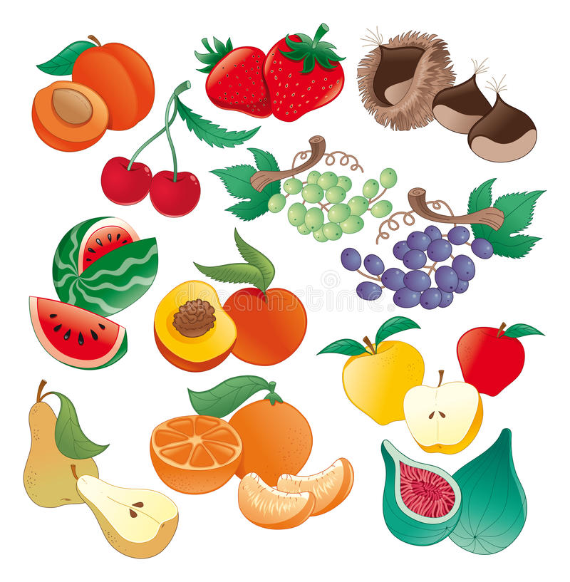 owocowa ilustracja ilustracja wektor