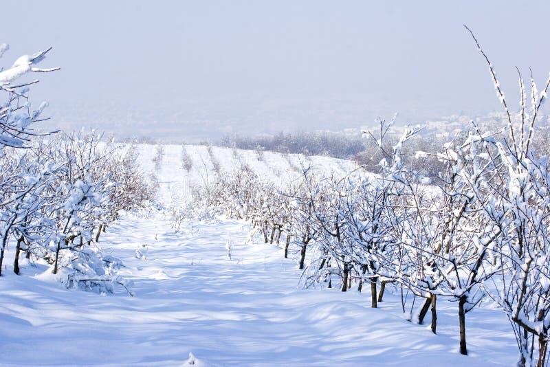 owocowego sadu zima fotografia royalty free