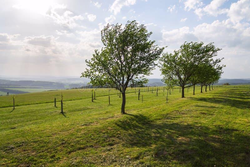 Owocowi drzewa w pięknym zielonym tradycyjnym sadzie, organicznie uprawiać ziemię, pogodny letni dzień, zdrowy styl życia pojęcie zdjęcia stock