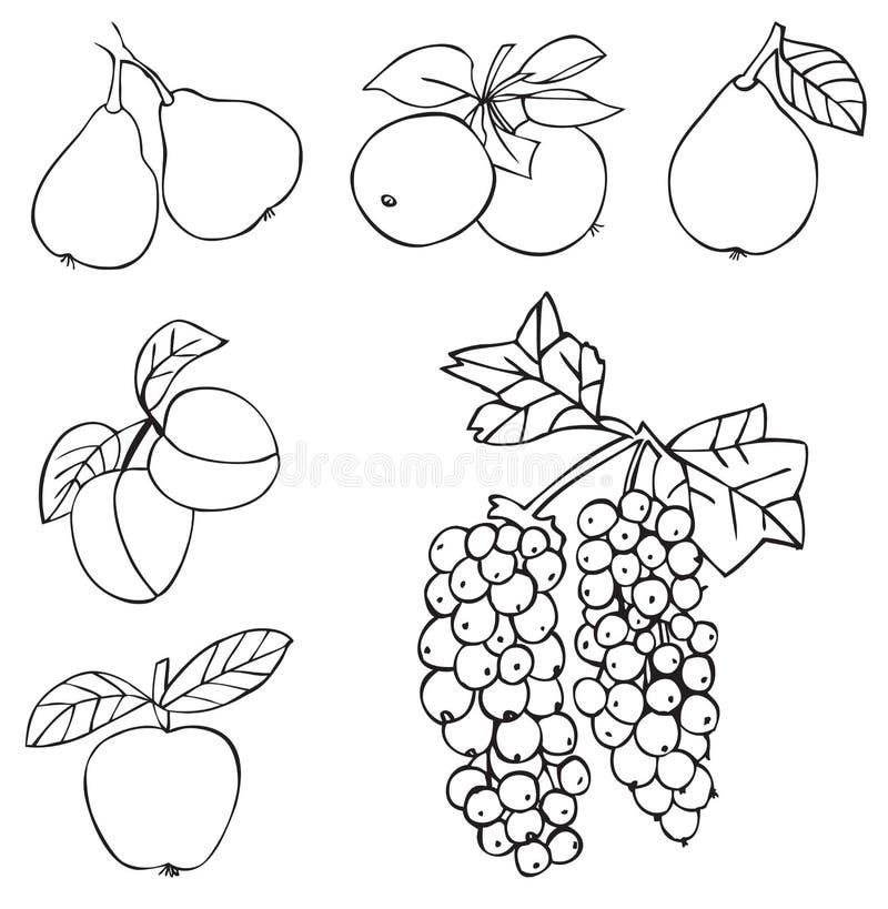 Owocowi winogrona Apple i bonkreta ilustracji
