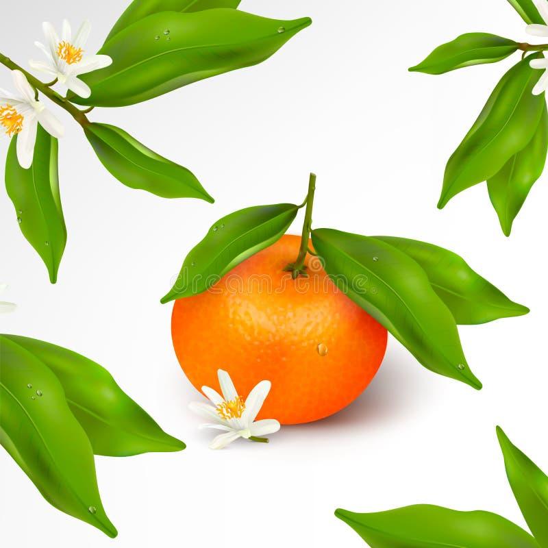 Owocowy lub kwiecisty wzór Cytrus owoc tangerine na gałąź z zieleń liśćmi z, mandarynka lub ilustracji