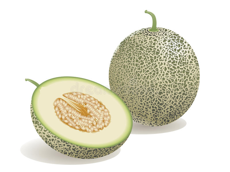 owocowy melon royalty ilustracja