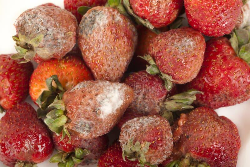 owocowy przegniły zdjęcia stock