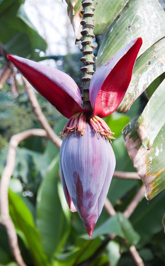owocowy tropikalny obraz royalty free