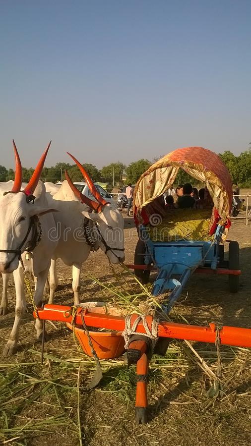 Ox and bullock cart stock images