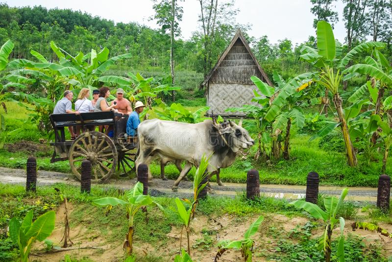 Ox carries a cart with people. Transportation in the forests of Thailand royalty free stock images