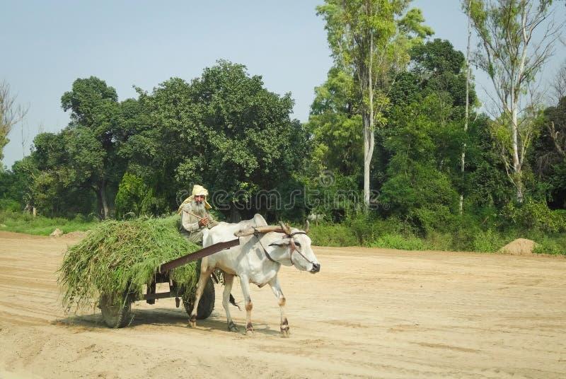 Oxcart i Indien royaltyfri bild