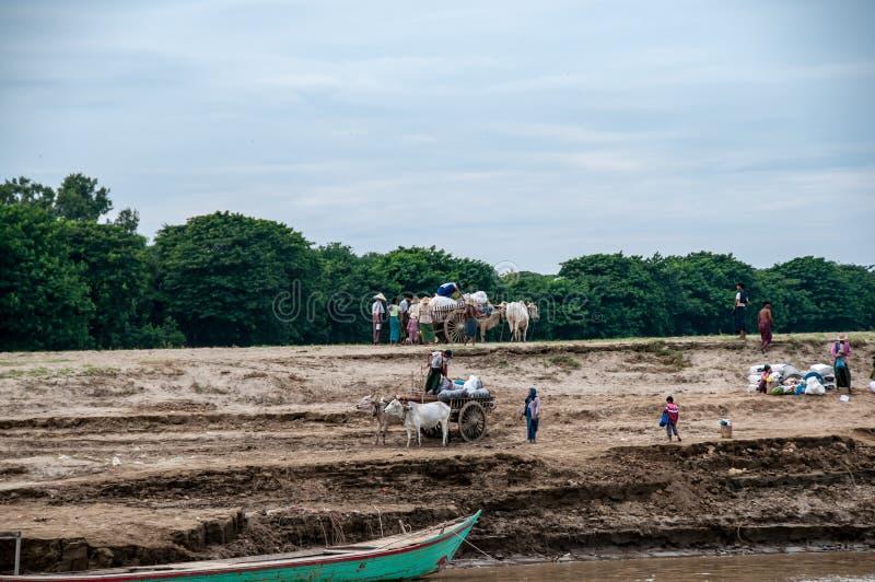 Oxe-drog vagnar på bankerna av den Irrawaddy floden arkivfoto