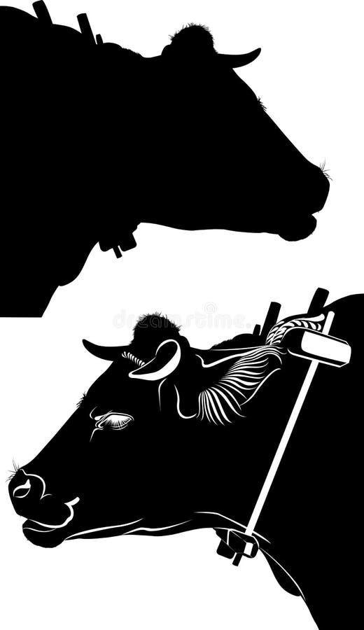 oxe _ Svart ko som isoleras på vit bakgrund vektor stock illustrationer